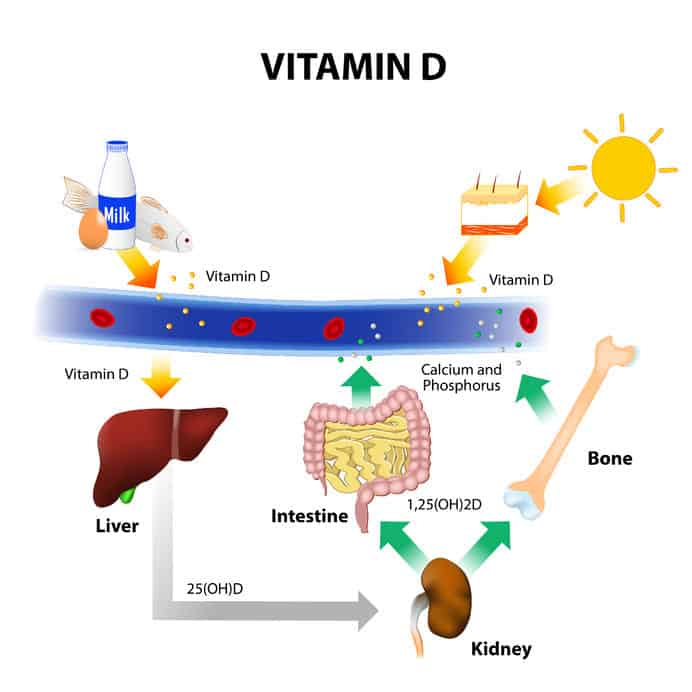 Diagram depicting Foods containing Vitamin D. skin absorbs solar uvb radiation and synthesis of vitamin d. calcium homeostasis and metabolism.