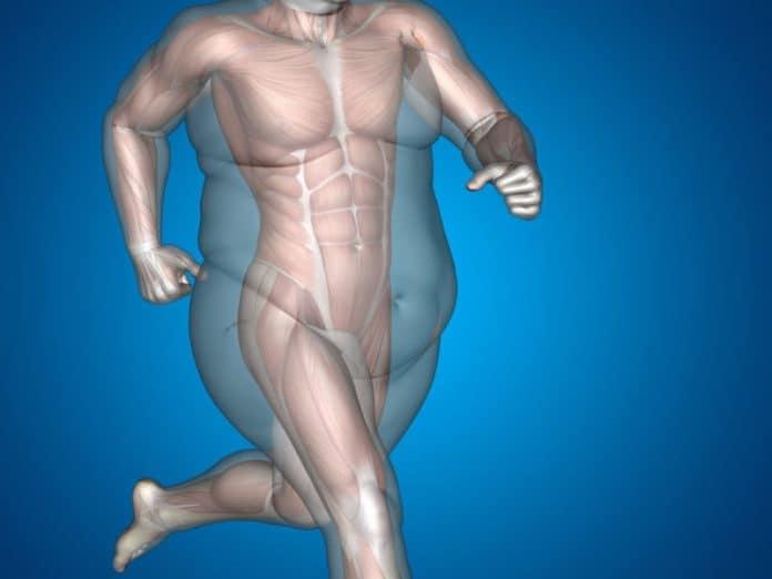 Male fat and slim concept